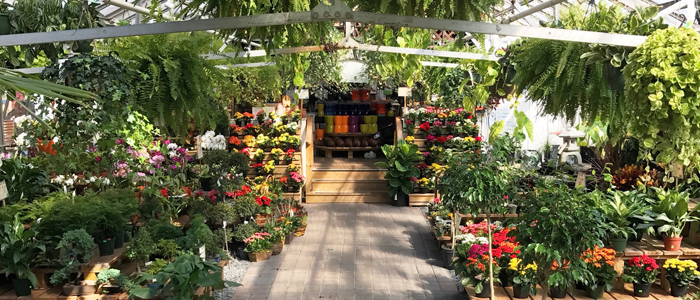 garden shop. Stop By Today For All Your Indoor Plant Needs Garden Shop P