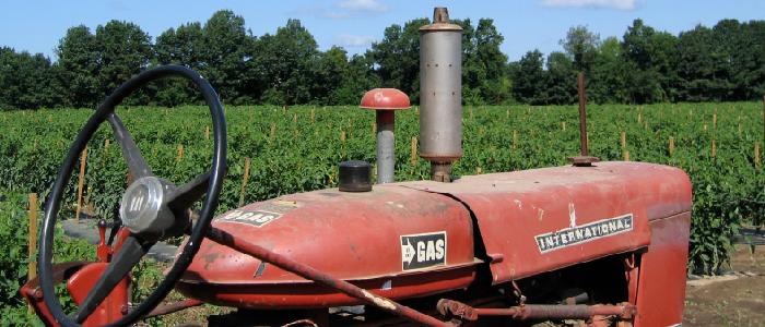 wilson farm growing since 1884